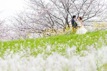 桜の開花予想が発表されました‼︎:サムネイル