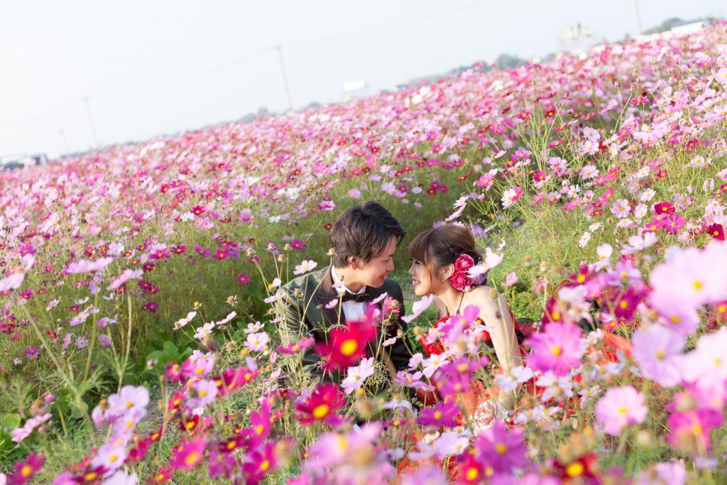 北部エリア 三光コスモス園(10月23日2015年 (4))