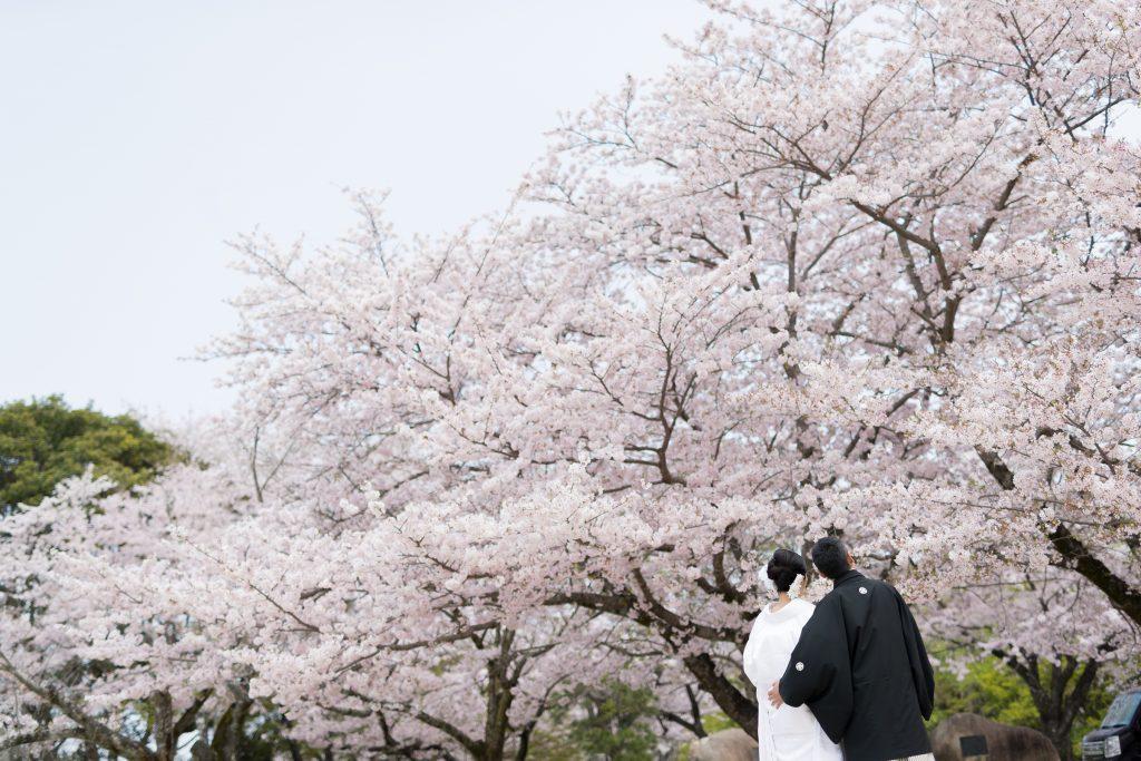 白無垢、桜、の前撮りフォト