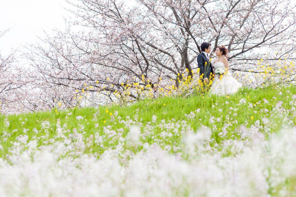 白ドレス、桜、花、の前撮りフォト