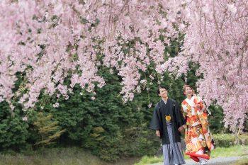 桜のシーズン 撮影はいつ頃?:サムネイル