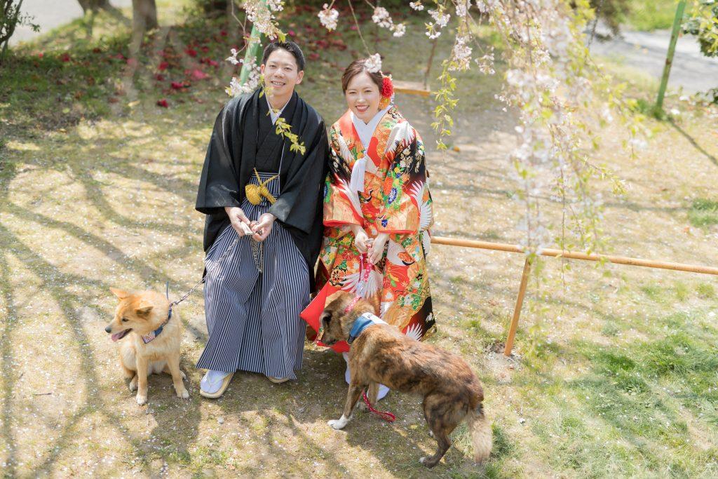 色打掛、桜、オフショット、の前撮りフォト