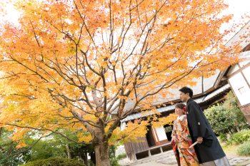 秋のシーズンが…:サムネイル