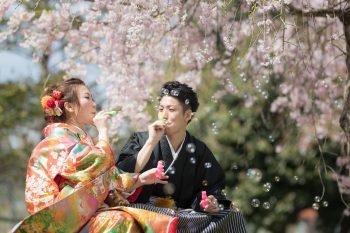 今年の桜がヤバイです!:サムネイル