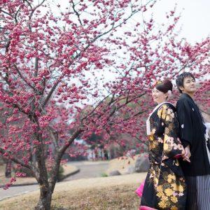 中部エリア 別府南立石公園(03月19日2014年 (1))