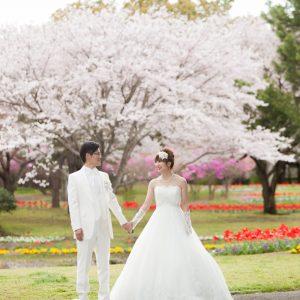 中部エリア 別府公園(04月04日2016年)