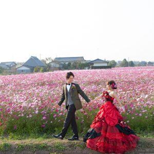 北部エリア 三光コスモス園(10月23日2015年 (3))